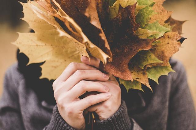 javorové listí