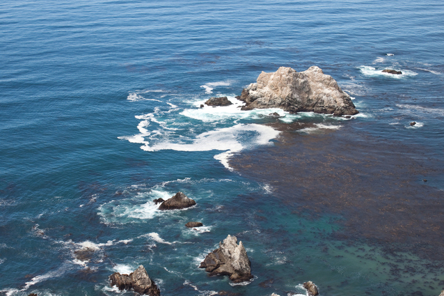 mořská řasa kelp pod vodou